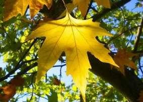 Сочинение про осень, 2 класс